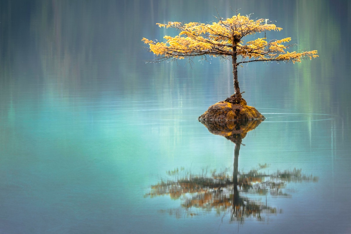 reflecting tree